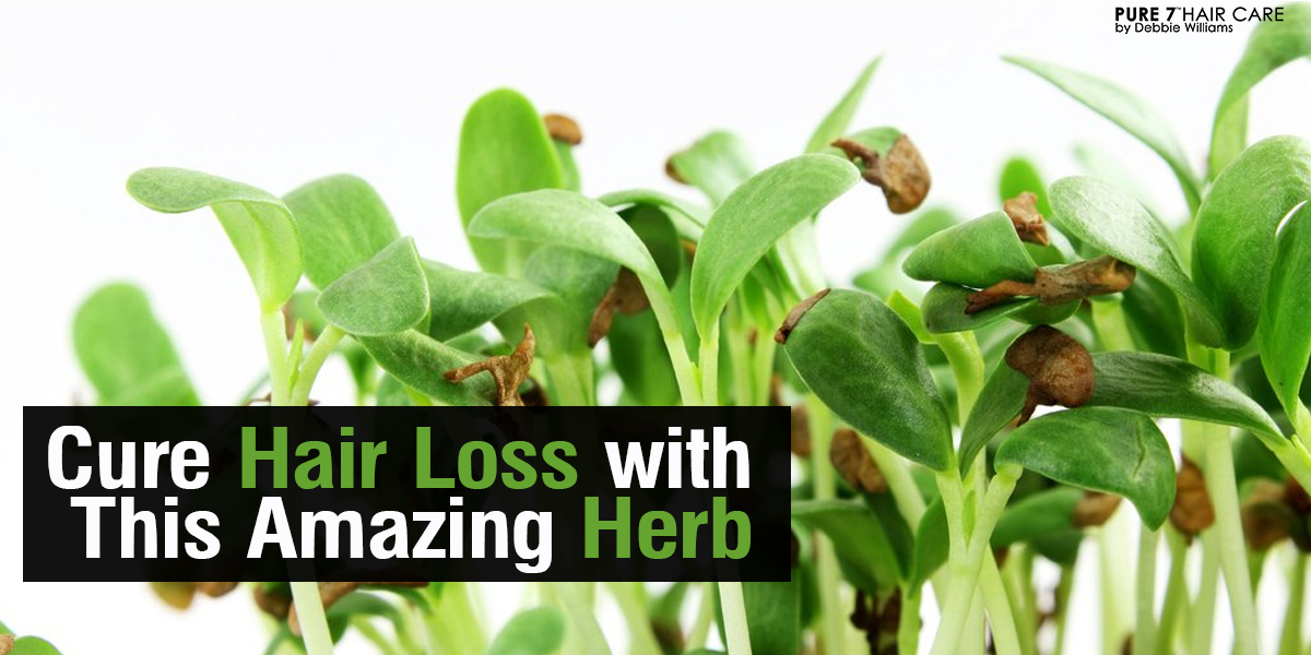 CURE HAIR LOSS WITH THIS AMAZING HERB - ask debbie about hair